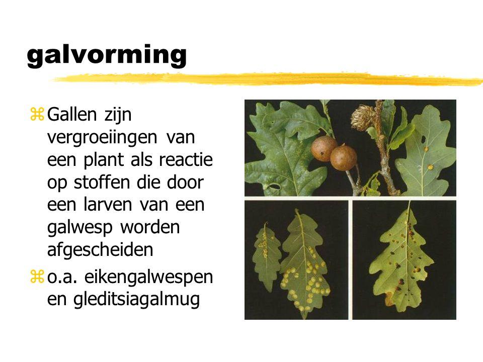 galvorming Gallen zijn vergroeiingen van een plant als reactie op stoffen die door een larven van een galwesp worden afgescheiden.