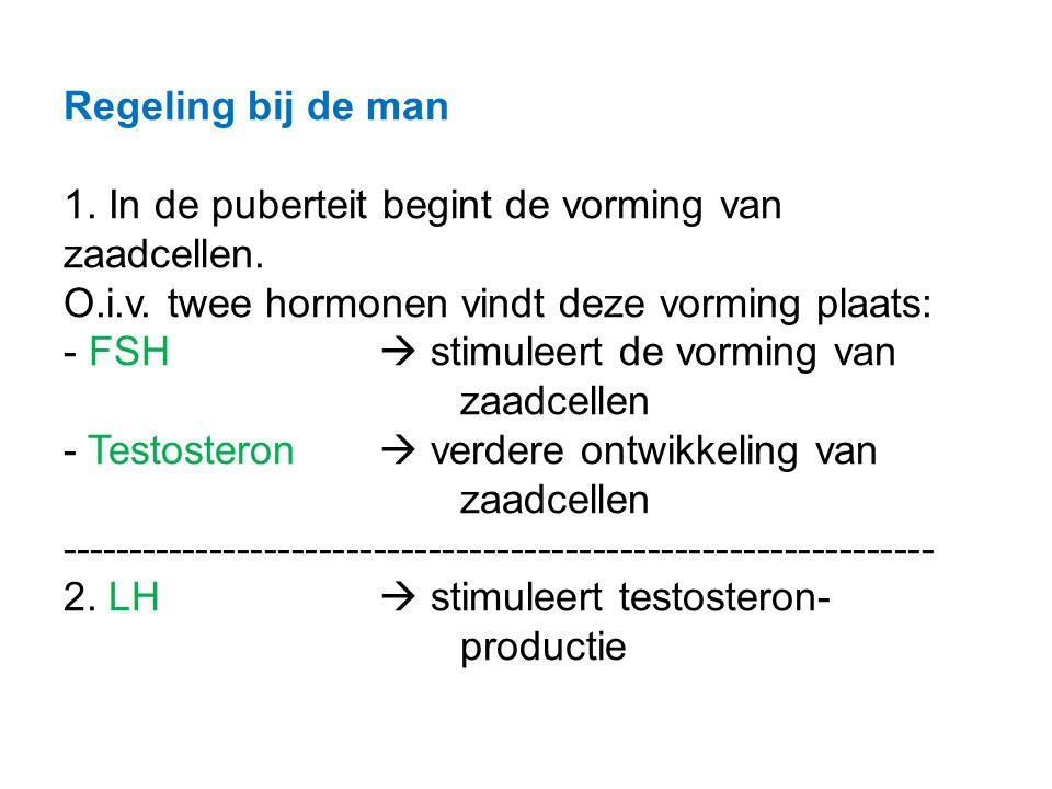 Regeling bij de man 1. In de puberteit begint de vorming van zaadcellen.
