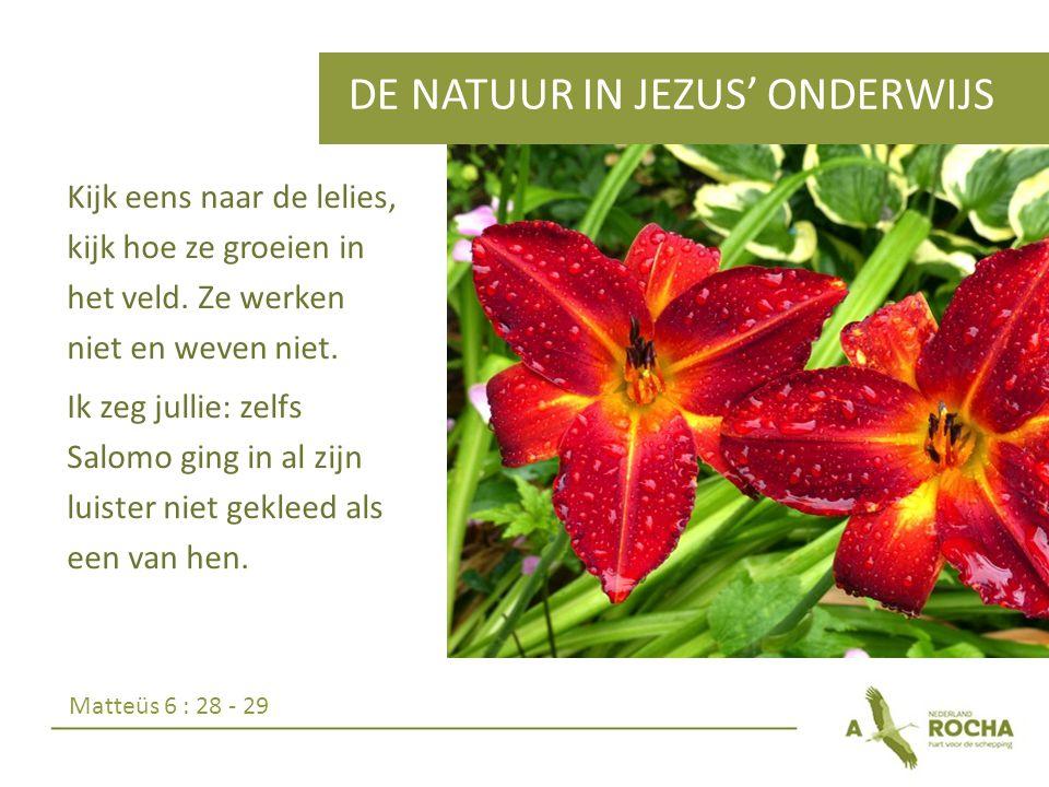DE NATUUR IN JEZUS' ONDERWIJS