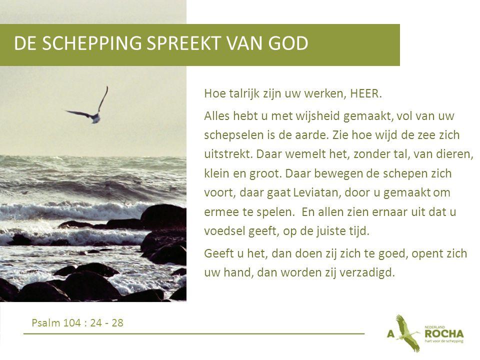 DE SCHEPPING SPREEKT VAN GOD