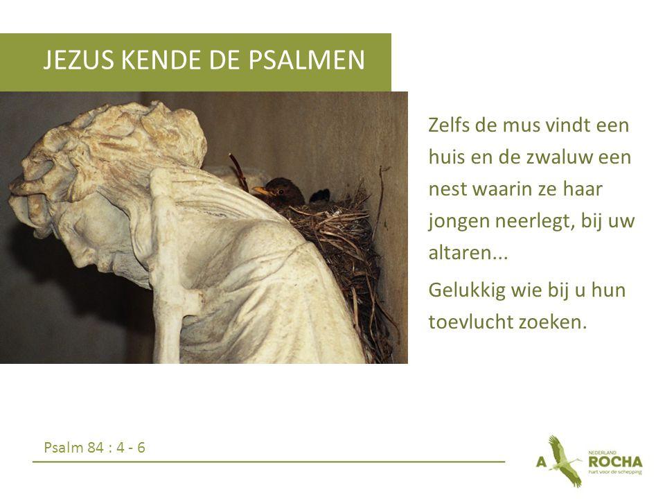 JEZUS KENDE DE PSALMEN
