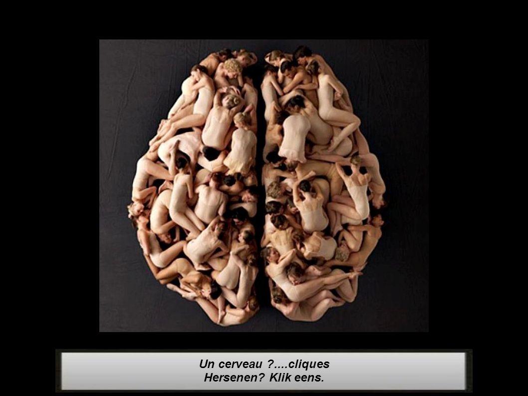 Un cerveau ....cliques Hersenen Klik eens.
