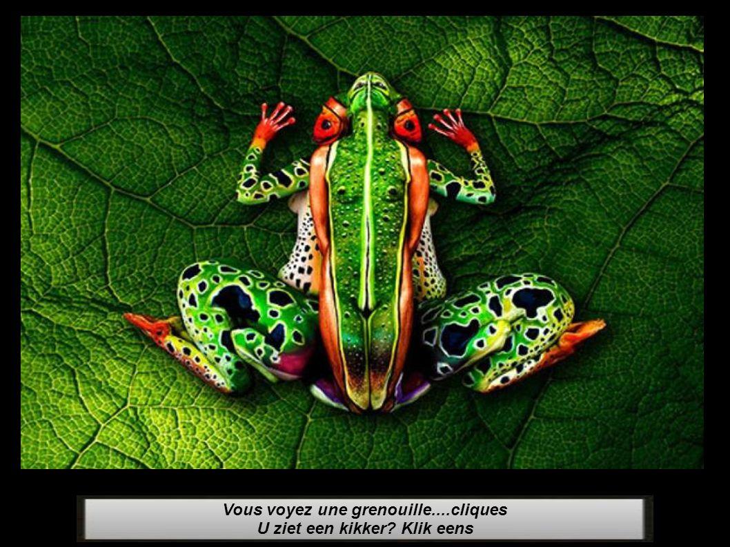 Vous voyez une grenouille....cliques U ziet een kikker Klik eens