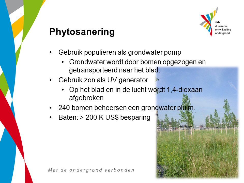 Phytosanering Gebruik populieren als grondwater pomp