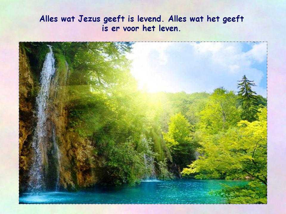 Alles wat Jezus geeft is levend