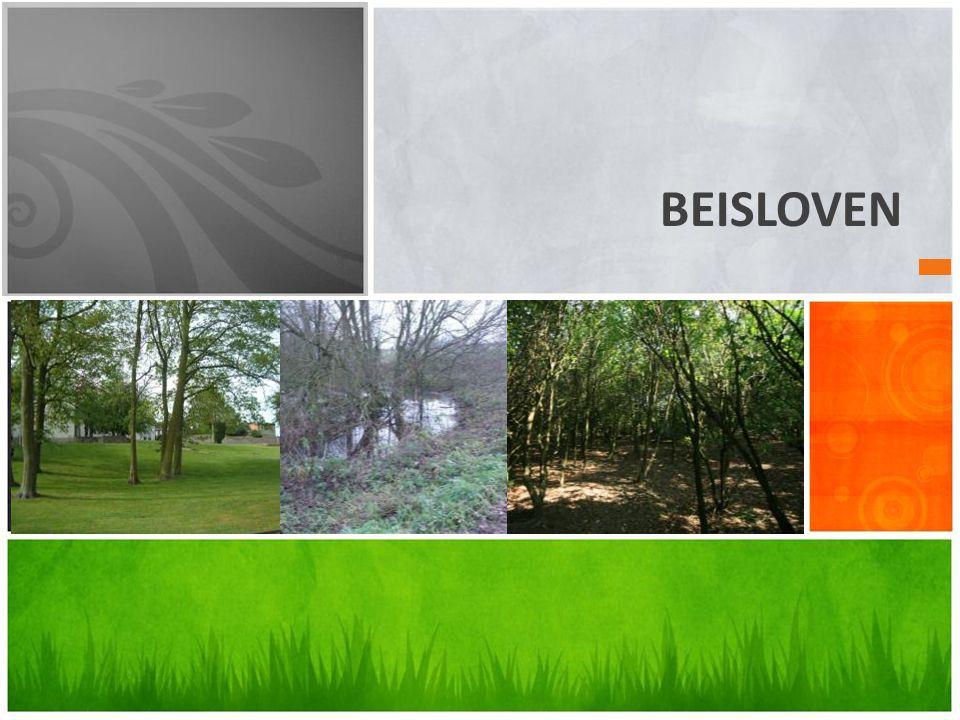 BEISLOVEN