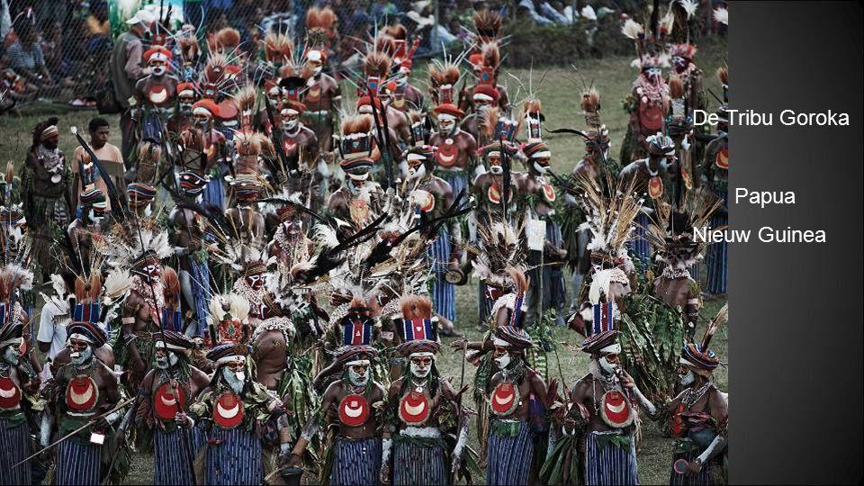 De Tribu Goroka Papua Nieuw Guinea
