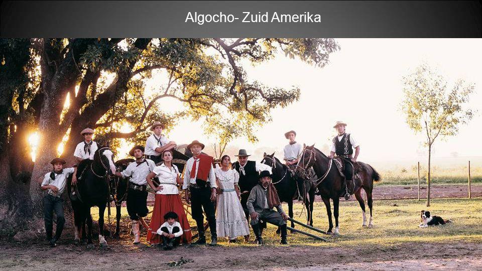 Algocho- Zuid Amerika