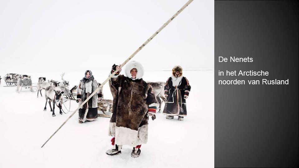 De Nenets in het Arctische noorden van Rusland