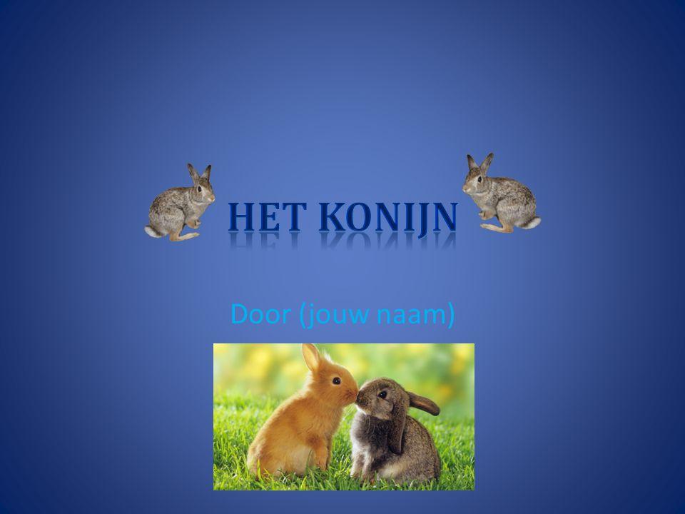 Het konijn Door (jouw naam)