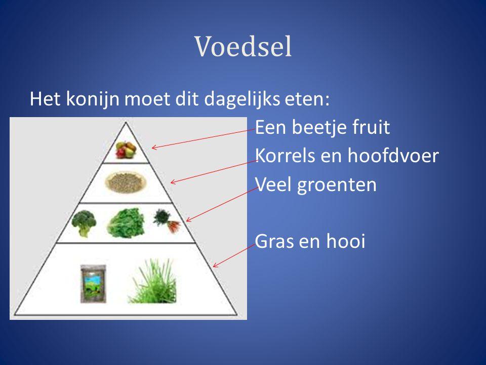Voedsel Het konijn moet dit dagelijks eten: Een beetje fruit Korrels en hoofdvoer Veel groenten Gras en hooi