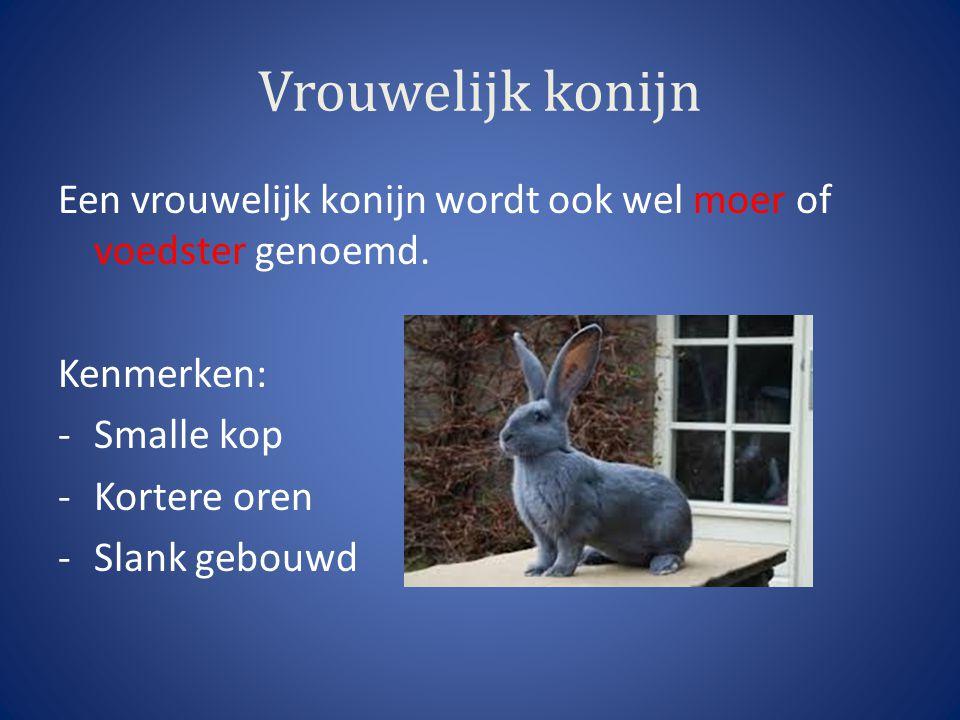Vrouwelijk konijn Een vrouwelijk konijn wordt ook wel moer of voedster genoemd. Kenmerken: Smalle kop.