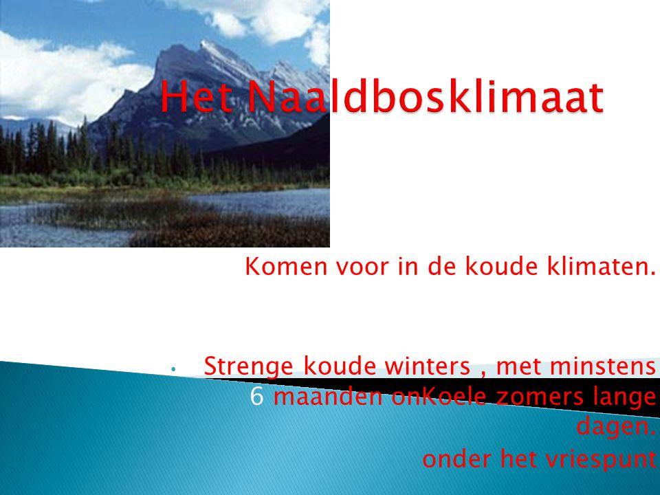Het Naaldbosklimaat Komen voor in de koude klimaten.