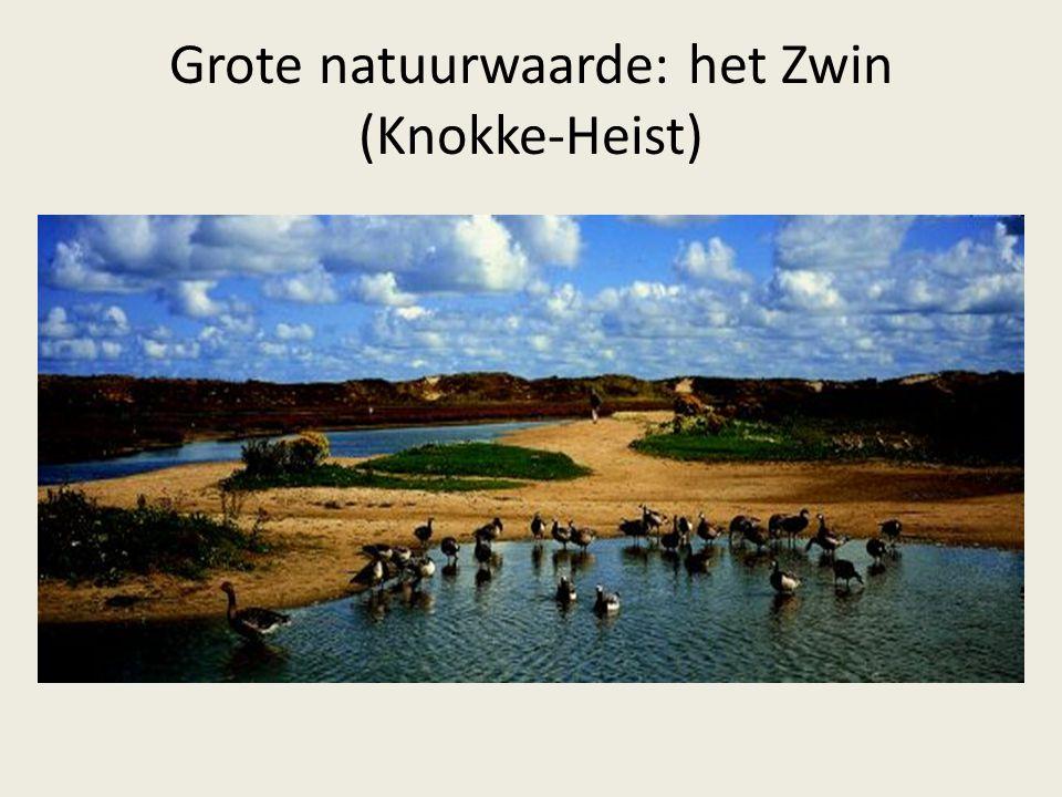 Grote natuurwaarde: het Zwin (Knokke-Heist)