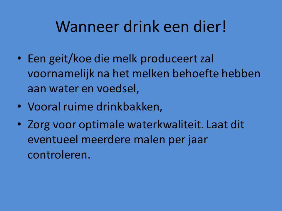 Wanneer drink een dier! Een geit/koe die melk produceert zal voornamelijk na het melken behoefte hebben aan water en voedsel,