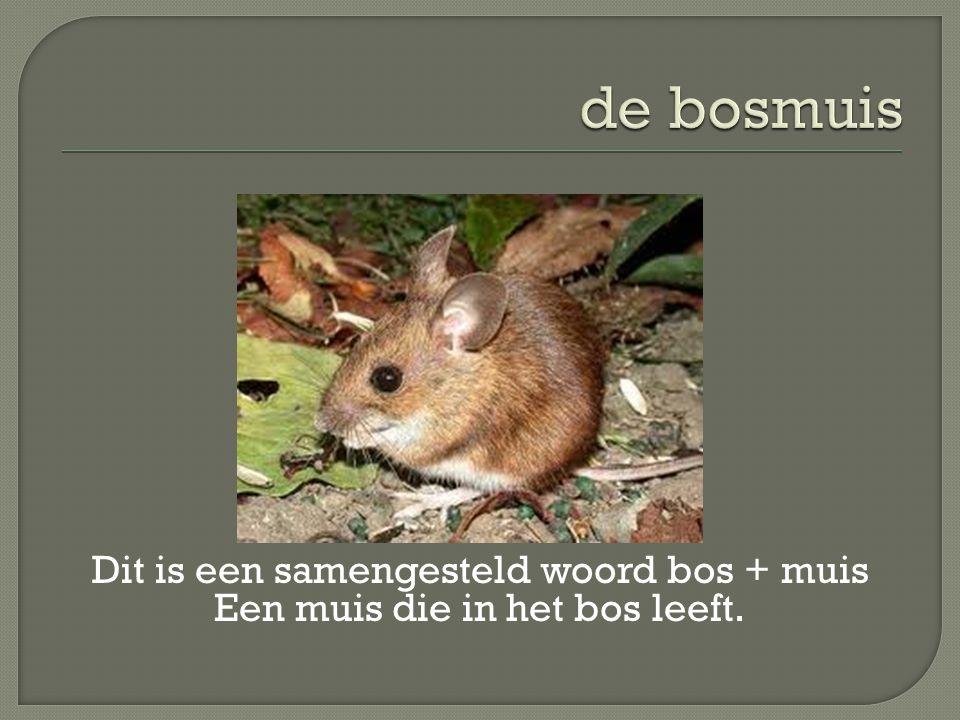 de bosmuis Dit is een samengesteld woord bos + muis Een muis die in het bos leeft.