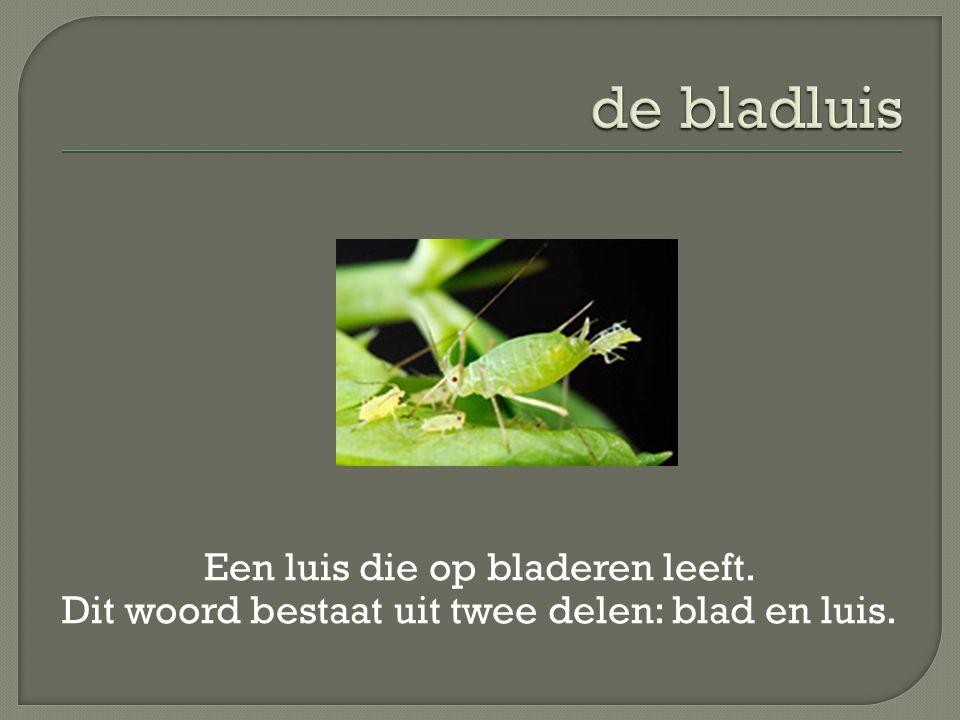 de bladluis Een luis die op bladeren leeft. Dit woord bestaat uit twee delen: blad en luis.