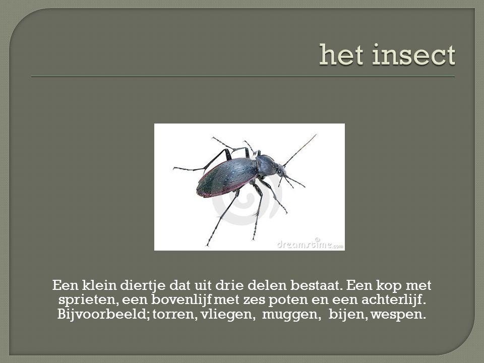 het insect
