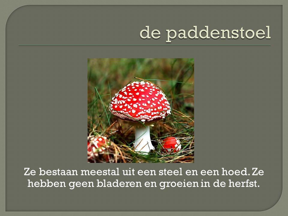 de paddenstoel Ze bestaan meestal uit een steel en een hoed.
