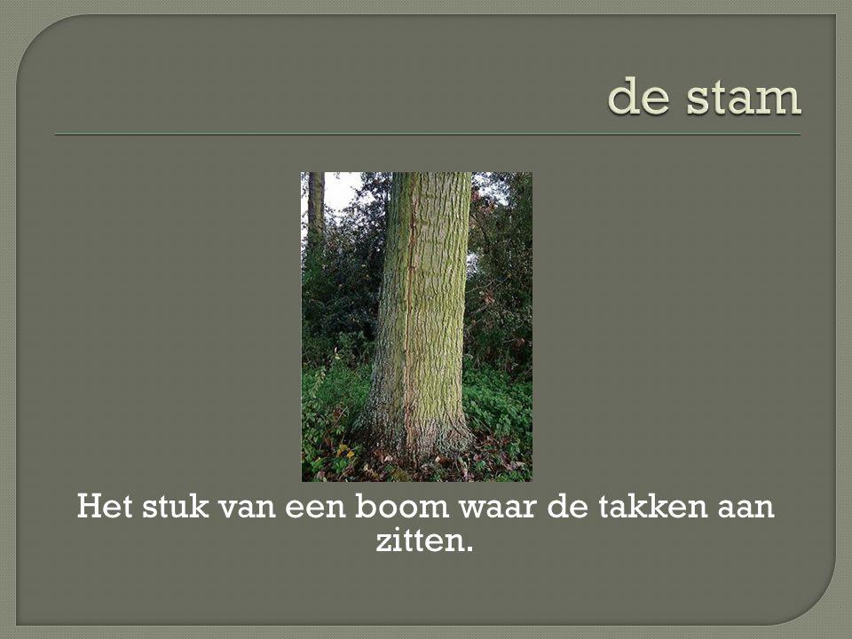 Het stuk van een boom waar de takken aan zitten.