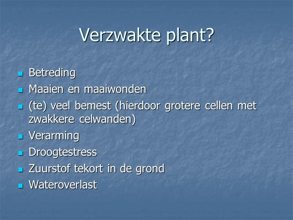 Verzwakte plant Betreding Maaien en maaiwonden