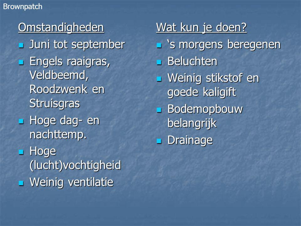 Engels raaigras, Veldbeemd, Roodzwenk en Struisgras