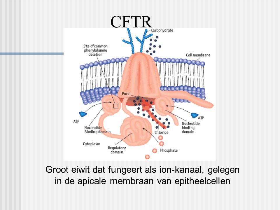 CFTR Groot eiwit dat fungeert als ion-kanaal, gelegen