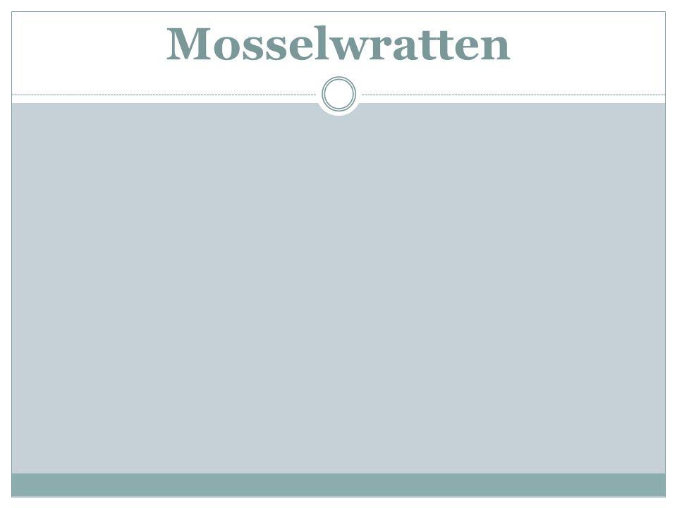 Mosselwratten