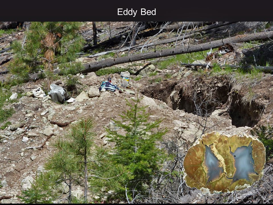 Eddy Bed