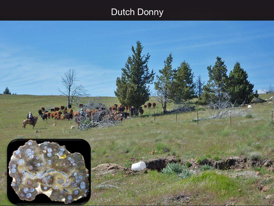 Dutch Donny