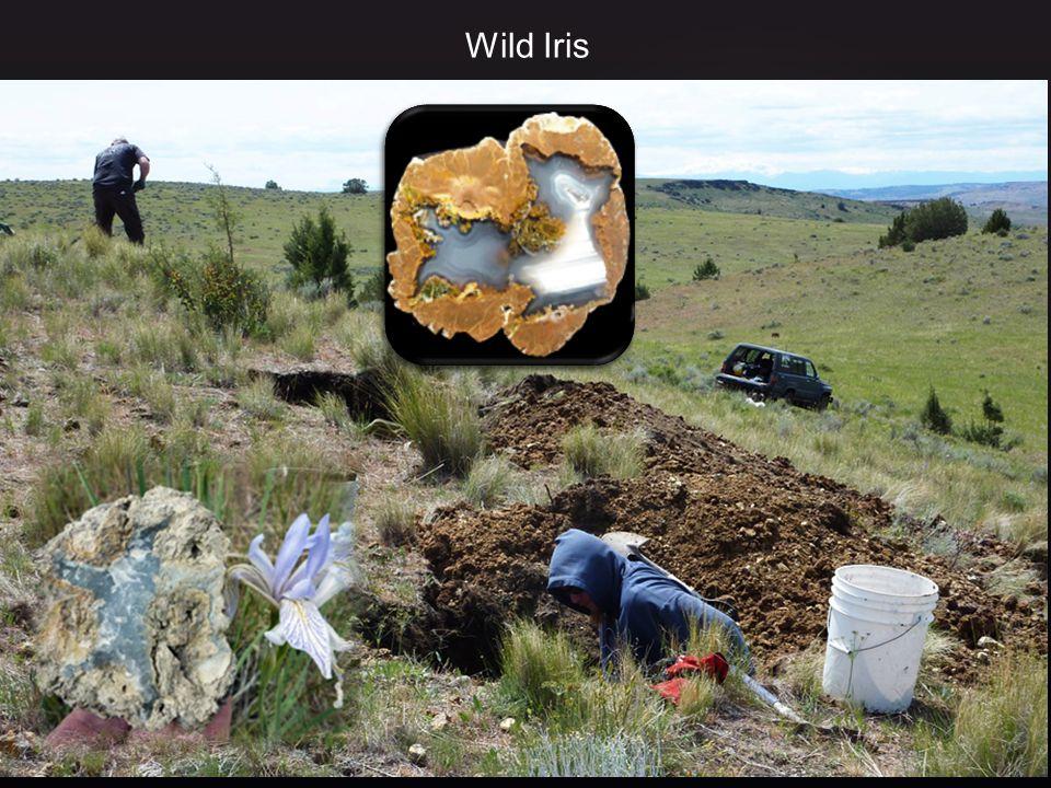 Wild Iris www.mineraalverzamelen.nl 24 januari 2015
