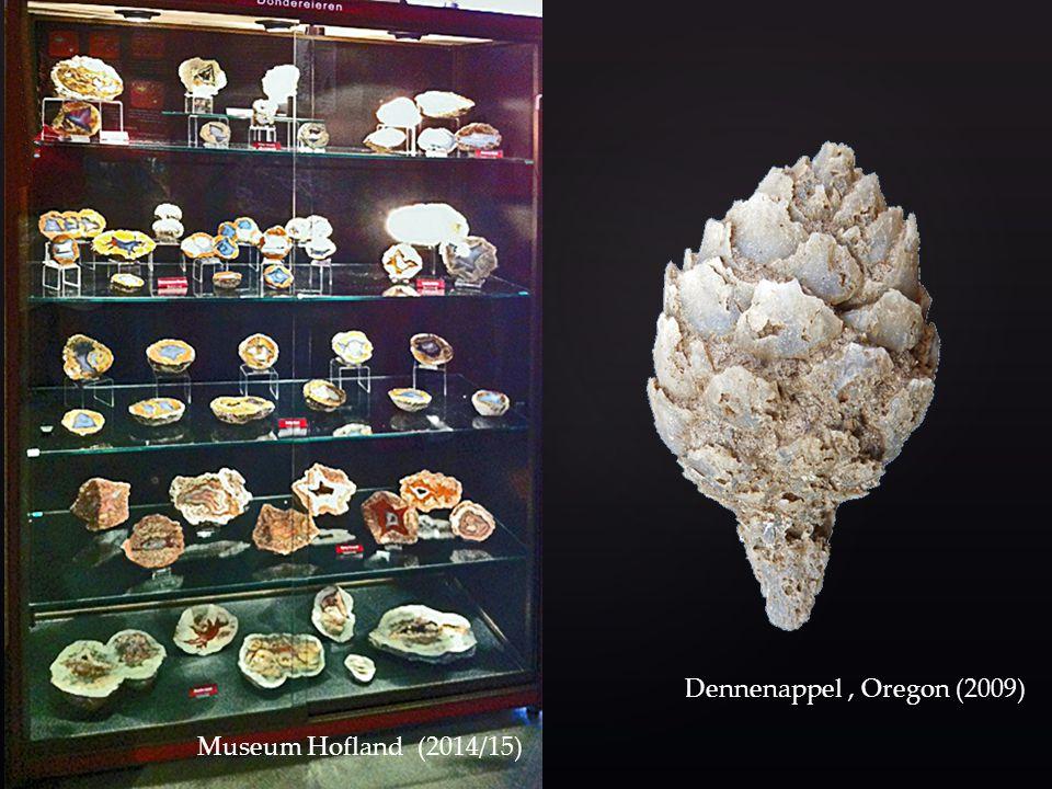 Museum Hofland (2014/15) Dennenappel , Oregon (2009)