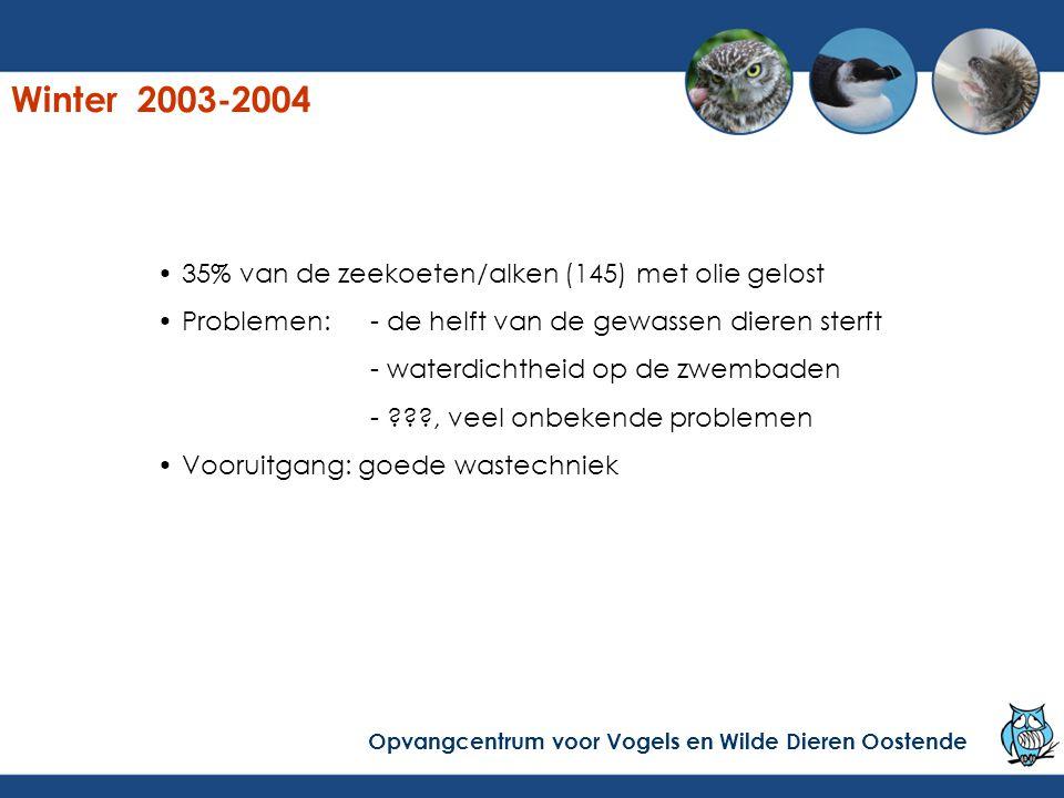 Winter 2003-2004 35% van de zeekoeten/alken (145) met olie gelost