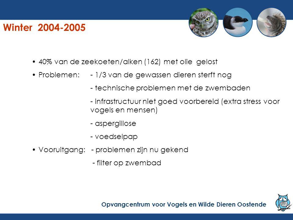 Winter 2004-2005 40% van de zeekoeten/alken (162) met olie gelost