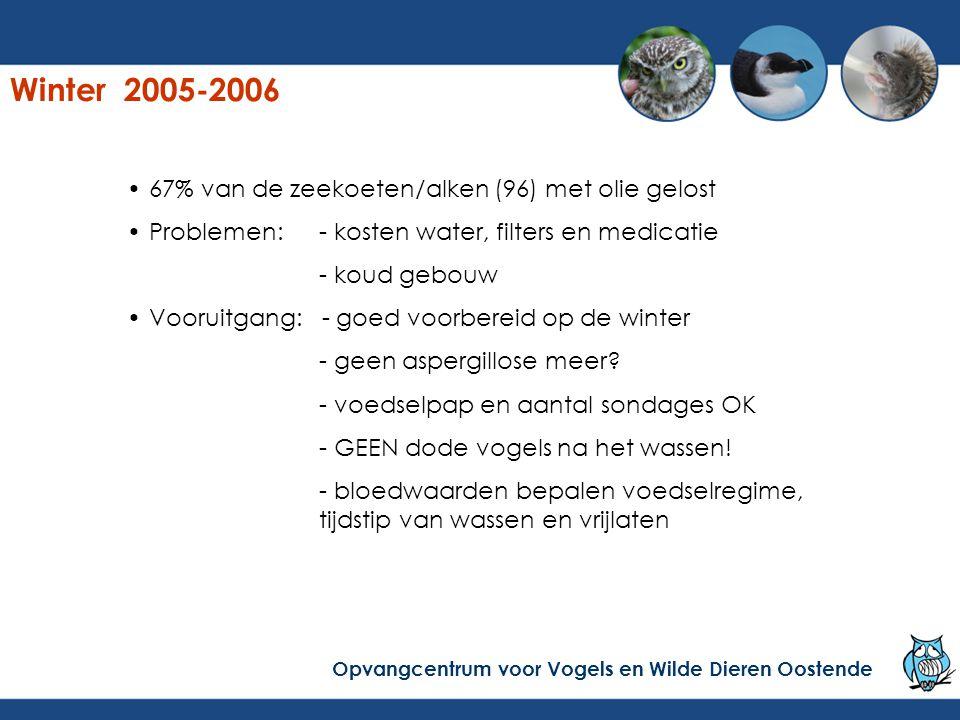 Winter 2005-2006 67% van de zeekoeten/alken (96) met olie gelost