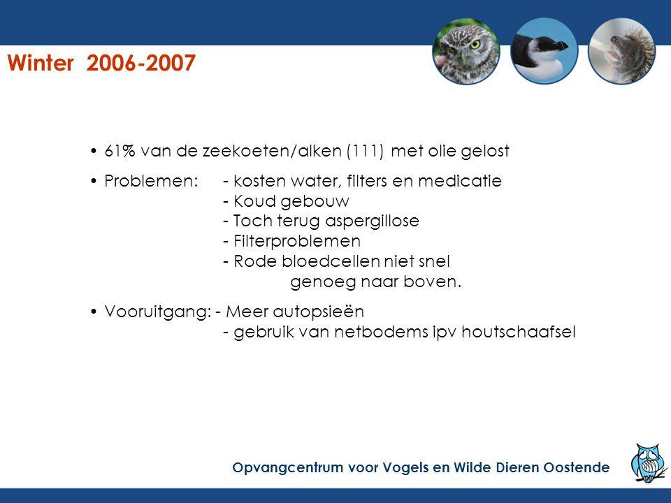 Winter 2006-2007 61% van de zeekoeten/alken (111) met olie gelost