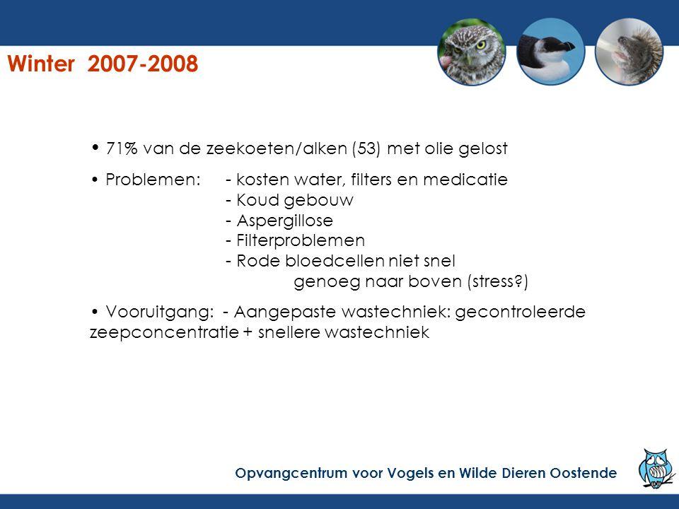 Winter 2007-2008 71% van de zeekoeten/alken (53) met olie gelost