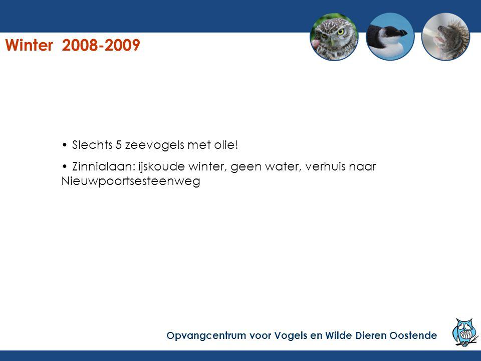 Winter 2008-2009 Slechts 5 zeevogels met olie!