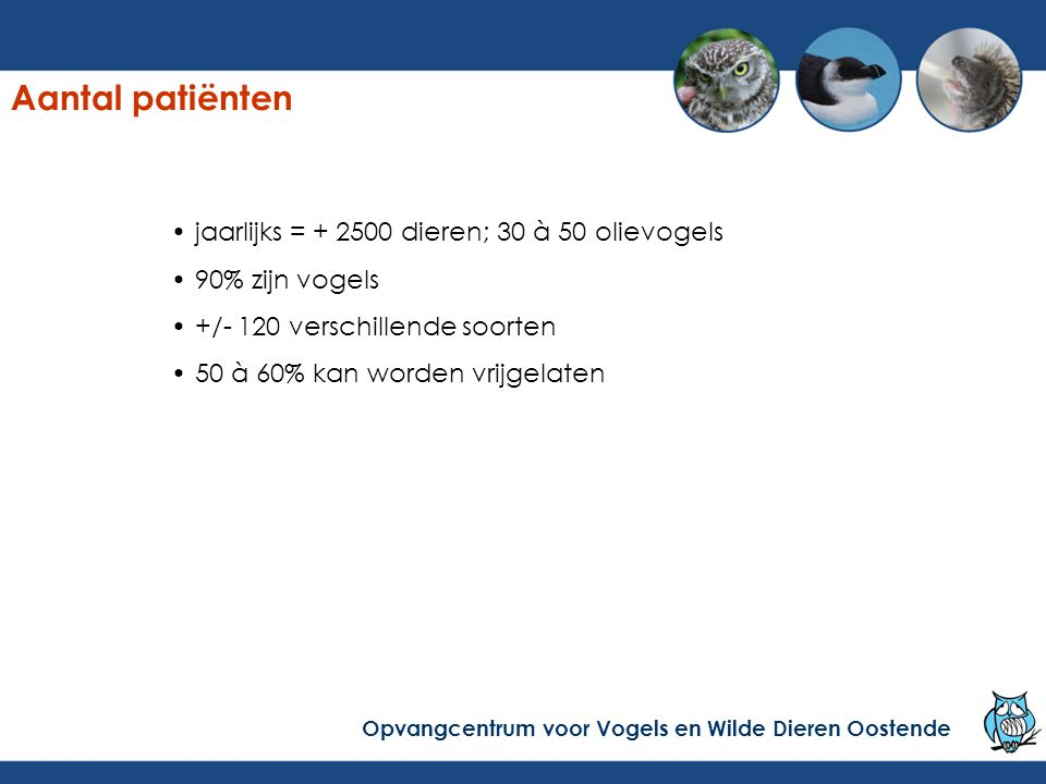 Aantal patiënten jaarlijks = + 2500 dieren; 30 à 50 olievogels