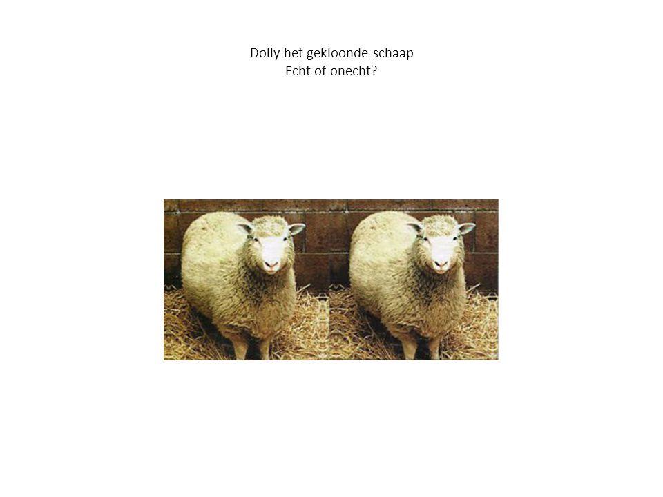 Dolly het gekloonde schaap Echt of onecht