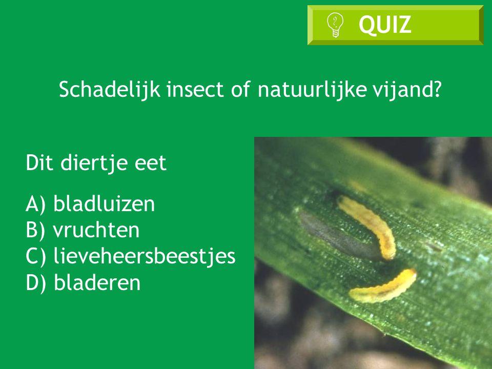 Schadelijk insect of natuurlijke vijand
