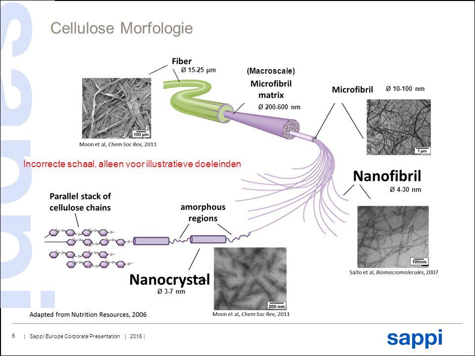 Cellulose Morfologie Ø 15-25 µm. Ø 200-600 nm. Ø 10-100 nm. Ø 4-30 nm. Ø 3-7 nm. (Macroscale)
