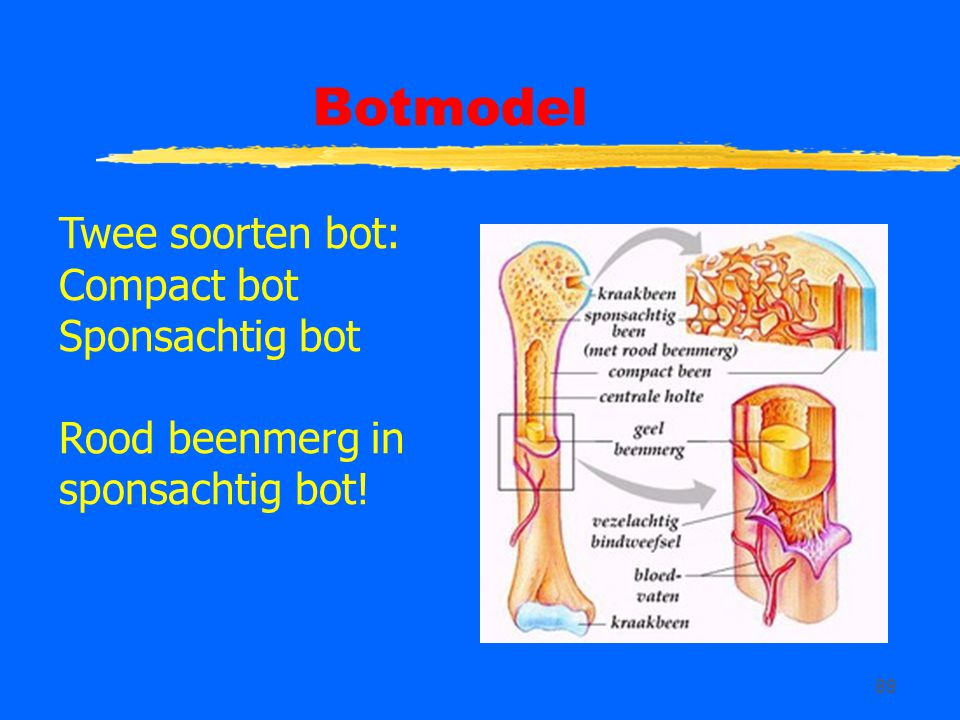 Botmodel Twee soorten bot: Compact bot Sponsachtig bot