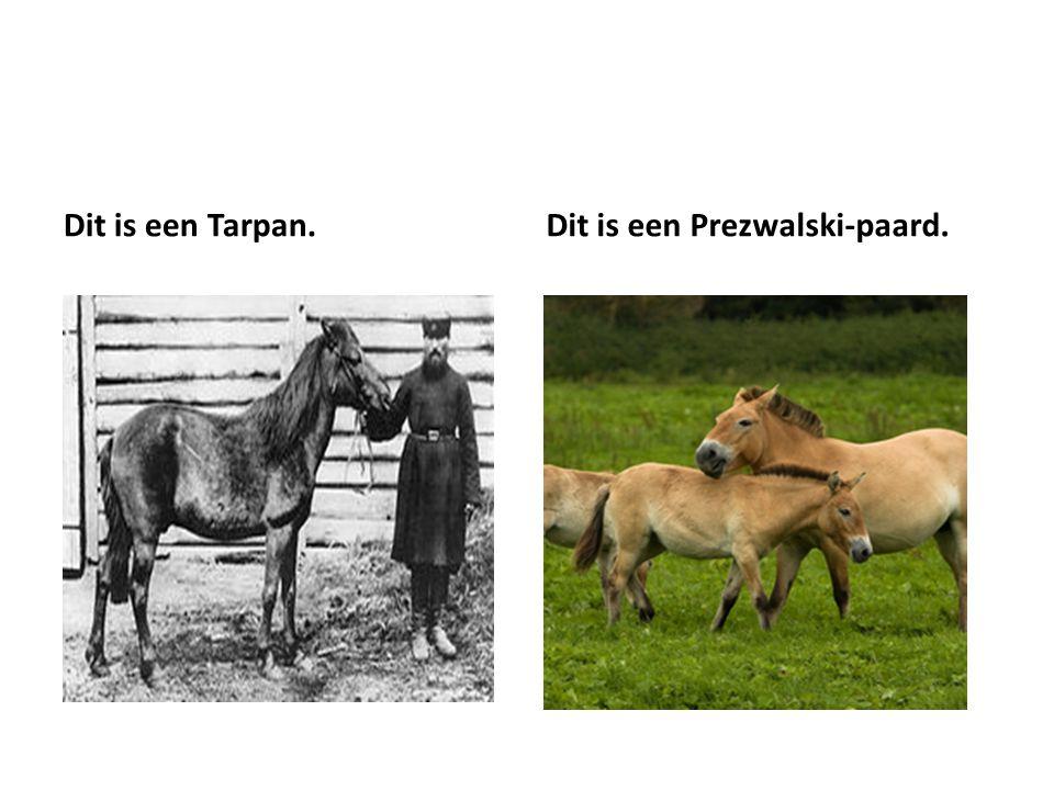 Dit is een Tarpan. Dit is een Prezwalski-paard.