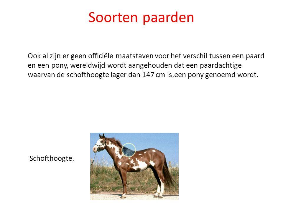 Soorten paarden