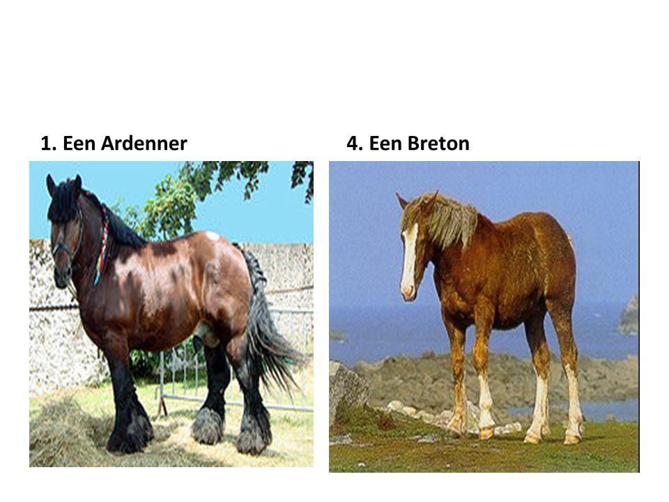1. Een Ardenner 4. Een Breton