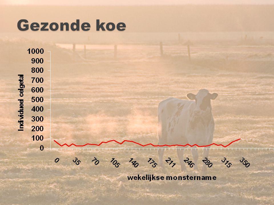 Gezonde koe