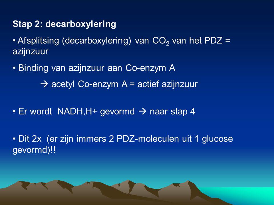 Stap 2: decarboxylering