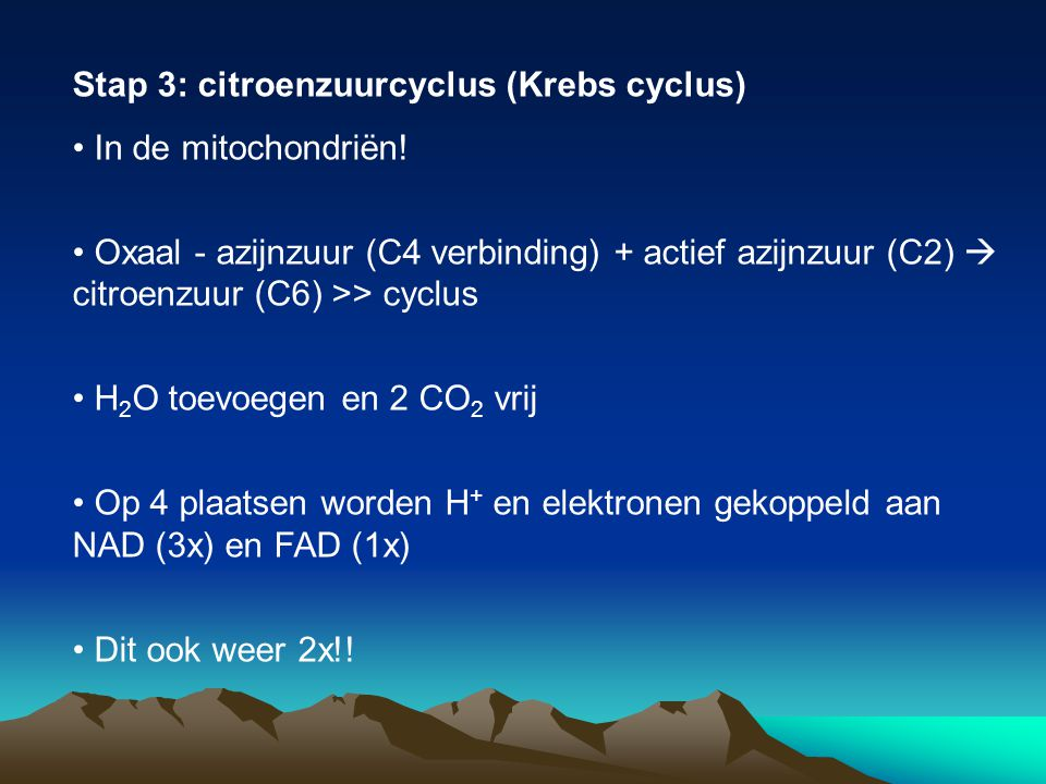 Stap 3: citroenzuurcyclus (Krebs cyclus)