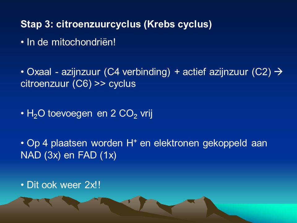 Stap 3: citroenzuurcyclus (Krebs cyclus)